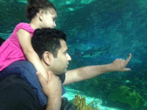 Ni & D at Ripley's Aquarium